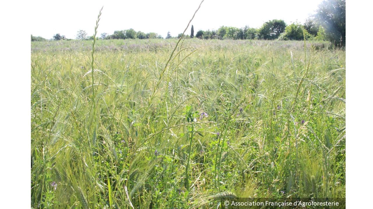 Agriculture de précision des couverts vivants aussi en AB – Perspectives Agricoles – janvier 2019