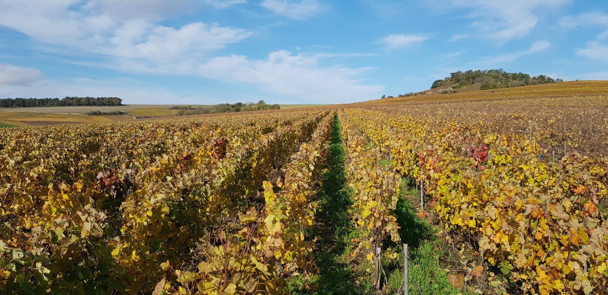 Les viticulteurs de l'année