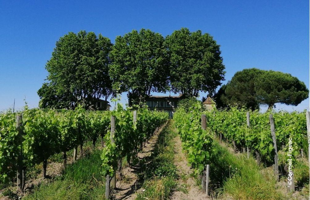 agreau viticulture